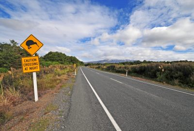 Road sign warning for crossing kiwis near Auckland