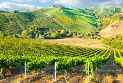 Lush green vineyards in the hills near Bordeaux